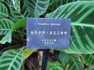 botanicalgarden0025.jpg