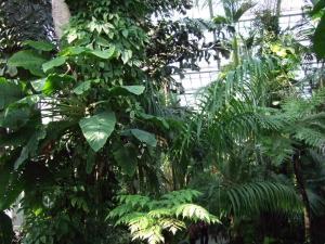 botanicalgarden0027.jpg