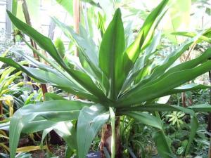 botanicalgarden0028.jpg