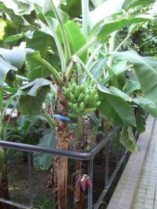 botanicalgarden0029.jpg