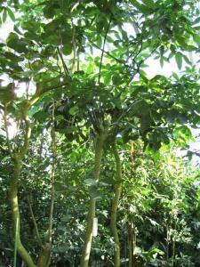botanicalgarden0031.jpg