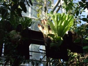 botanicalgarden0032.jpg