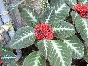 botanicalgarden0034.jpg