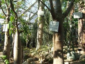 botanicalgarden0035.jpg
