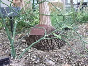 botanicalgarden0036.jpg