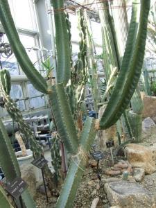 botanicalgarden0038.jpg