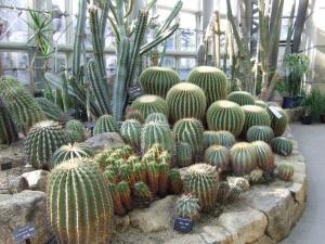 botanicalgarden0039.jpg
