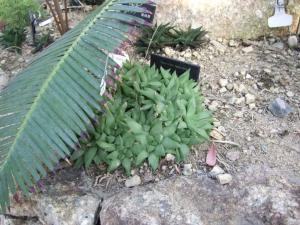 botanicalgarden0042.jpg