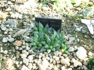 botanicalgarden0047.jpg