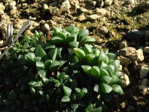 botanicalgarden0048.jpg