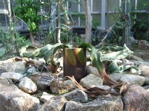 botanicalgarden0049.jpg