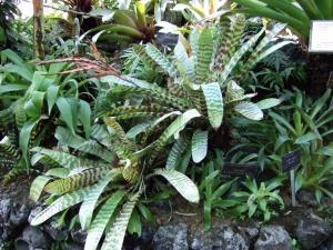 botanicalgarden0051.jpg
