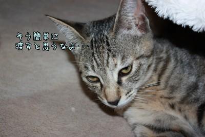 P_fR9U0A.jpg