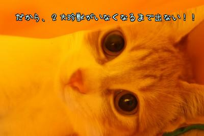 c_EZ01MK.jpg