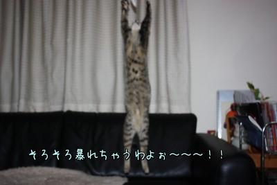 haGi_zYF.jpg