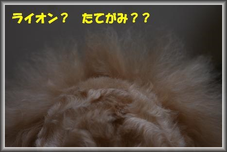 IMG_4753.jpg