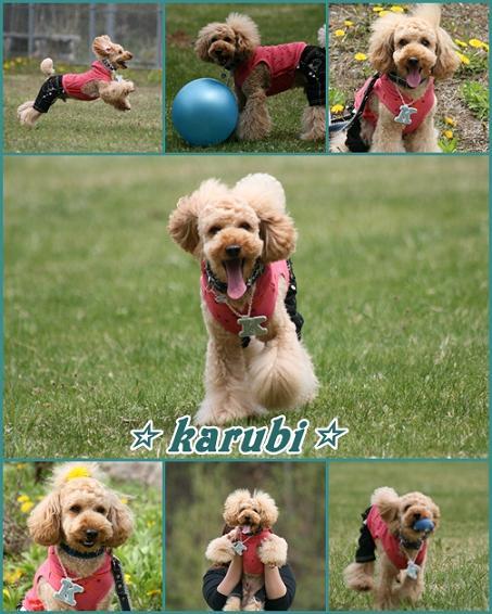 karubi1_20090504235329.jpg
