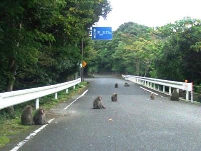 yakushima3.jpg