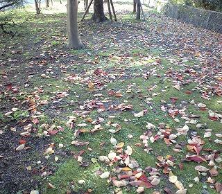 s-枯れ葉