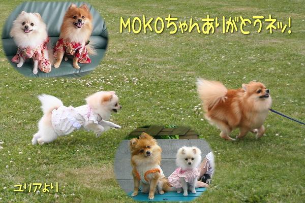 mokoyuria.jpg