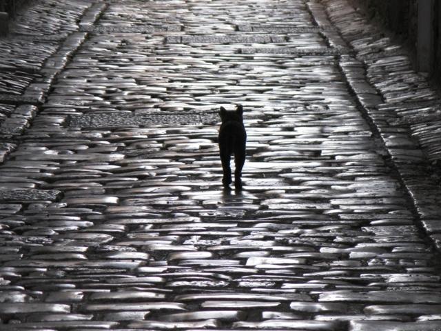 Cat 2 011 (2)