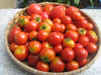 tomato080901