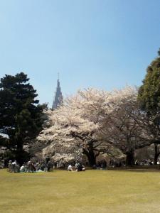 桜満開!2
