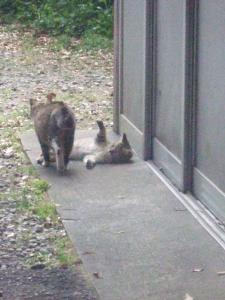 猫ちゃん発見