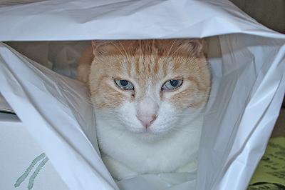 ビニール袋に入るナーゴさん