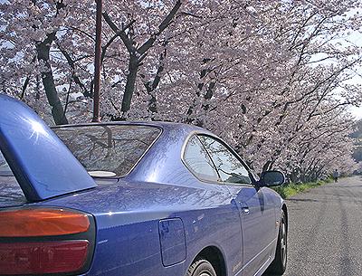 桜とS15シルビア