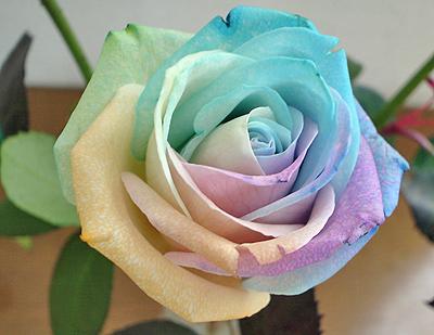 造花みたいな薔薇のド・アップ