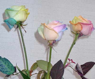 造花みたいな薔薇
