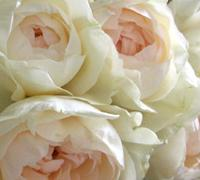 20080223_wedding02