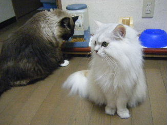 誰ですか!るーさんをイジメたのは!!!