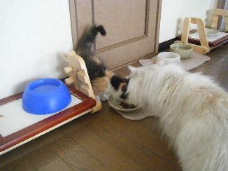 銀:ボクもご飯欲しいデス。ボクにもくださいデス。