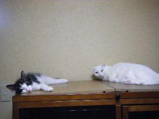 リ:モモちゃんと寝てるでち~
