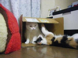 リ:モモちゃん遊ぶでち~