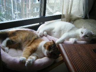 杏:寝てるんだからジャマすんにゃ!