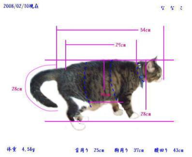 P_nanako-size.jpg