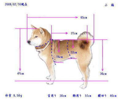 p_koume-size.jpg