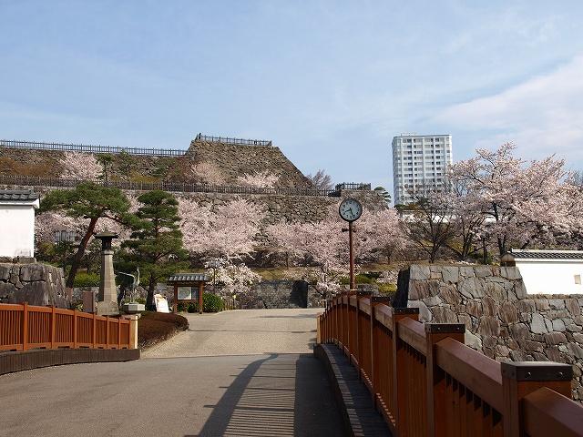 舞鶴城11