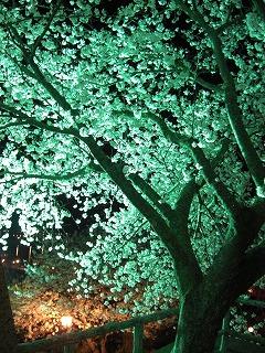 舞鶴城桜05