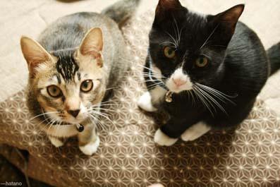 猫とイクラ-5