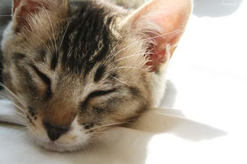猫と昼寝-1