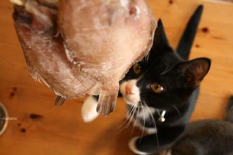 干物と猫たち-1