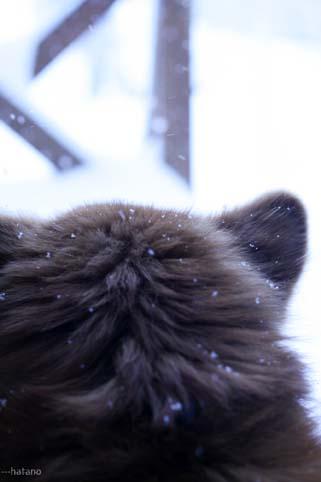 大雪の日の犬