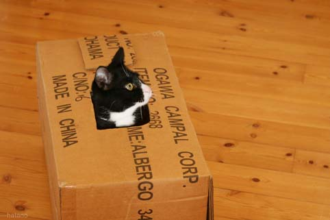かくれんぼ:猫-1