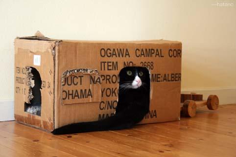 こんぶは箱の中