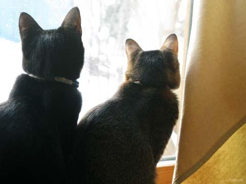 猫:肩寄せて