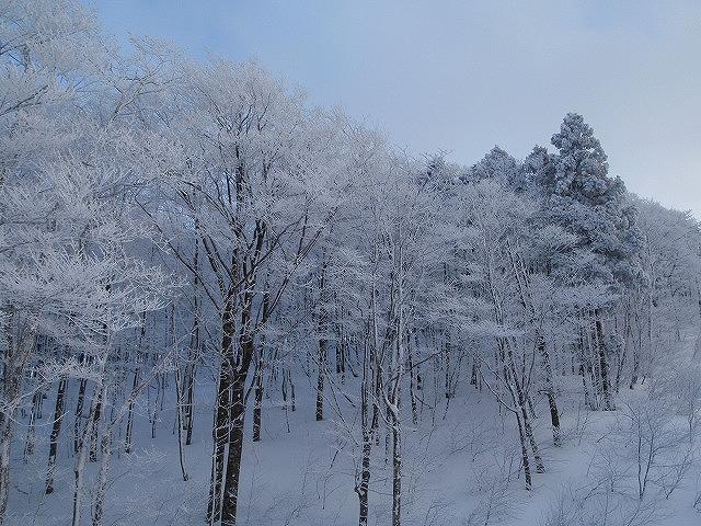 樹氷がキレイ♪